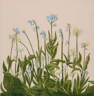 Graphic Studio Dublin • Cliona Doyle: Graphic Studio Dublin: Bluebells and Ramsons