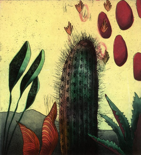 Niamh Flannagan, Title: a cactus contemplates among the succulents Medium: etching Image Size: 20 x 18 cm Unframed Price: €200 Price for the frame: €80