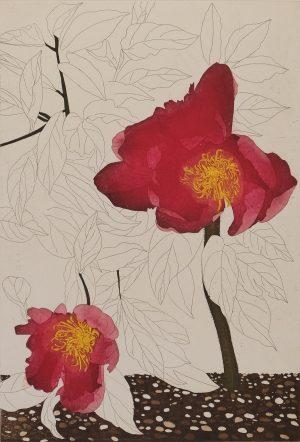 Graphic Studio Dublin •Cliona Doyle: Graphic Studio Dublin: Pear 'Louise Bonne'