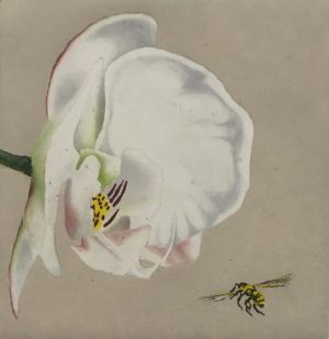 Graphic Studio Dublin • Maura Keating: Graphic Studio Dublin: Orchid and Bee