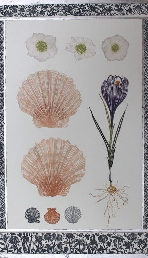 Graphic Studio Dublin • Jean Bardon: Scallop shells, crocus and