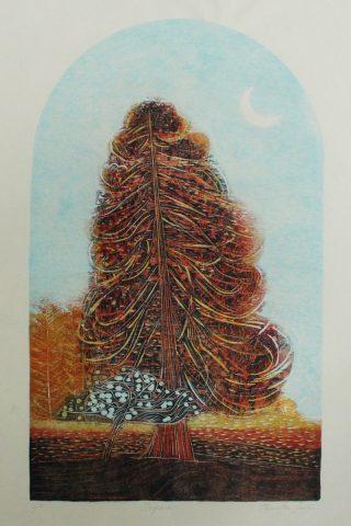 Jenny Lane, Sequoia