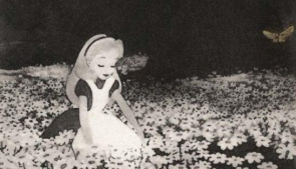 Alice among the Leucanthemum Vulgare, Tom Phelan