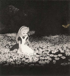 Alice among the Leucanthemum Vulgare, Tom Phelan