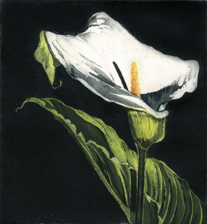Graphic Studio Dublin • Nicola Lynch Morrin: Arum Lily, Nicola Morrin Lynch