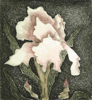 Graphic Studio Dublin •Margaret Becker: Becker Margaret, Botanical Bloom
