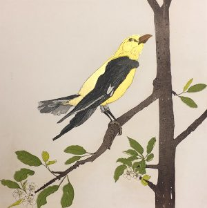 Graphic Studio Dublin • Cliona Doyle: Golden Oriole