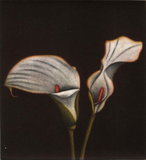 Lillies, James McCreary