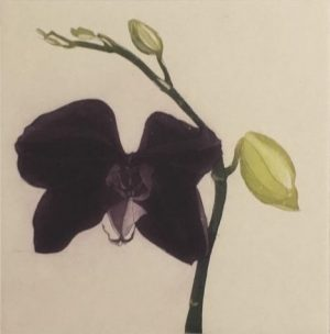 Graphic Studio Dublin • Cliona Doyle: Purple Butterfly Orchid, Cliona Doyle