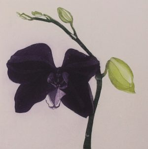 Graphic Studio Dublin • Cliona Doyle: Graphic Studio Dublin: Purple Butterfly Orchid