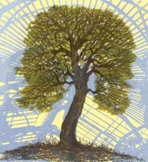 Quercus Suber, Aidan Flanagan