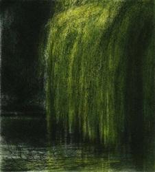 Salix x Sepulcralis, Alibhe Barrett