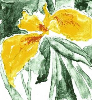 Graphic Studio Dublin •Liam O'Broin: Wild Iris, Liam O'Broin