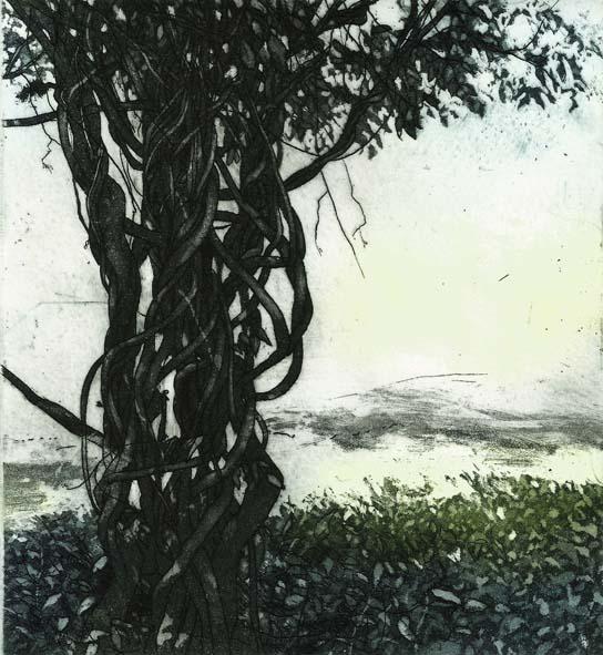Wisteria Sinesis, James Allen