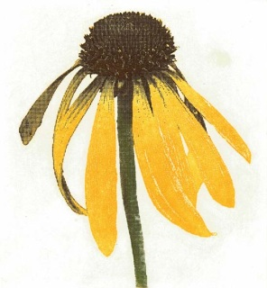 Yellow Echinacea, Peter Jones