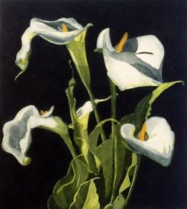 Arums V, Nicola Lynch Morrin