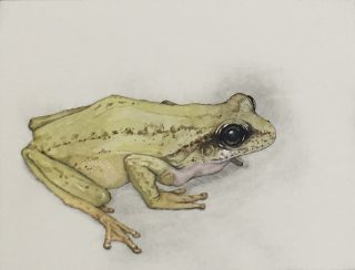 Frog, Barry Meskell