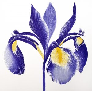Iris Sibirica III, Grainne Cuffe