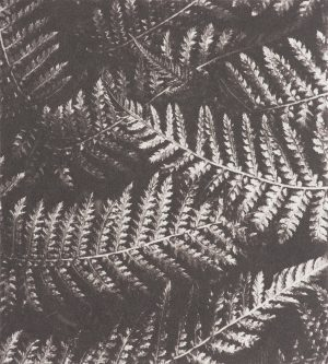 Graphic Studio Dublin • Matthew Gammon: Graphic Studio Dublin: Metallic Fern