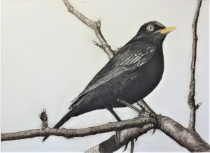 Graphic Studio Dublin • Geraldine O'Reilly: Geraldine O'Reilly The Blackbird of Glanmore (based on the Seamus Heaney poem)