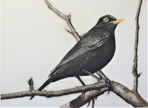 Geraldine O'Reilly The Blackbird of Glanmore (based on the Seamus Heaney poem)