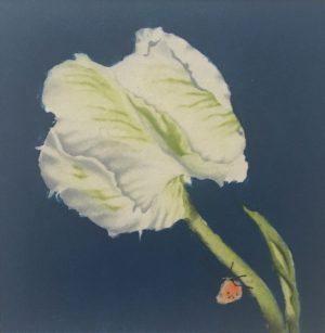 Graphic Studio Dublin •Maura Keating: Maura Keating Tulipa Madona