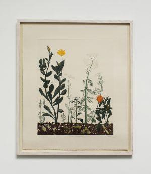 Graphic Studio Dublin •Cliona Doyle: Burren Herbgarden