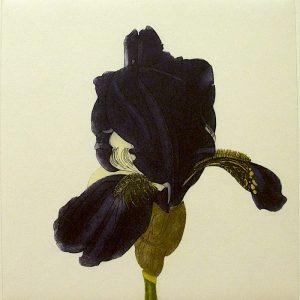 Graphic Studio Dublin •Cliona Doyle: Graphic Studio Dublin: Iris Marechal Ney