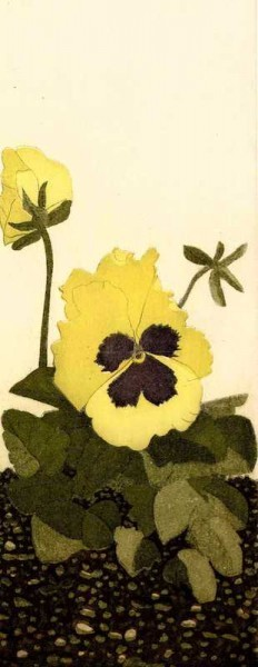 Graphic Studio Dublin •Cliona Doyle: Graphic Studio Dublin: Viola Wittrockiana