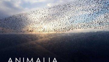 ANImalia_FEature.2