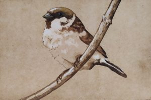 Graphic Studio Dublin •Barry Meskell: Sparrow