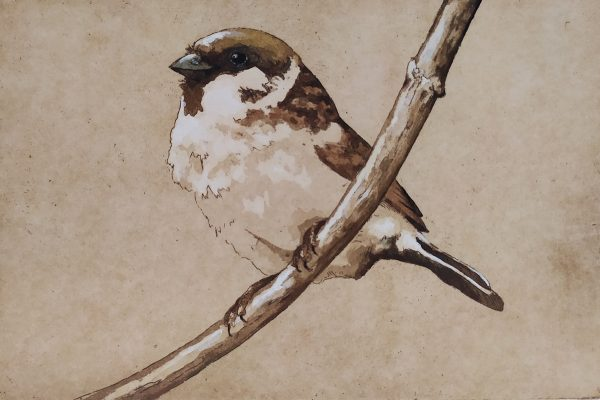 Barry Meskell, Sparrow
