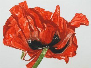 Nicola Lynch Morrin, Oriental Poppy