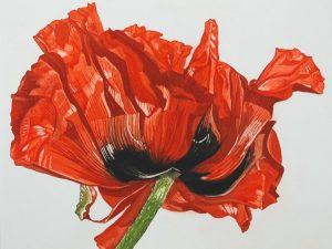 Graphic Studio Dublin •Nicola Lynch Morrin: Oriental Poppy