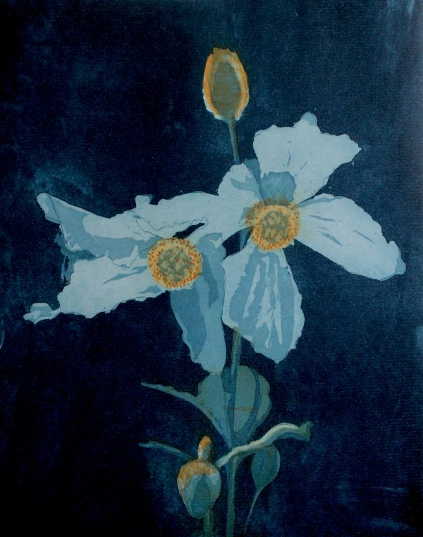 Paul Fitters, Meconopsis