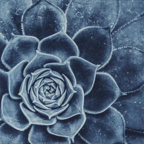 Succulent_Detail_Matthew Gammon