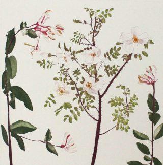 Cliona-Doyle-Wild-Rose