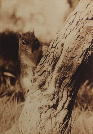 Graphic Studio Dublin • Mary Grey: Graphic Studio Dublin: Squirrel