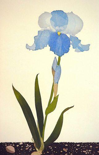 Iris 'Brise de Mer'
