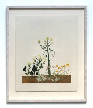 Graphic Studio Dublin • Cliona Doyle: Graphic Studio Dublin: Sea Radish and Sea Holly