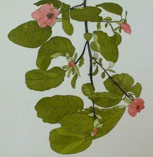 Graphic Studio Dublin •Cliona Doyle: Graphic Studio Dublin: Quince Blossom