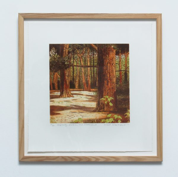 Graphic Studio Dublin: Sapling Dalkey Hill Woodland