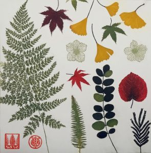 Pressed leaves and ferns