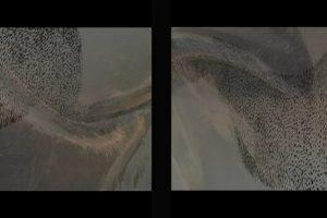 animation diptich photo 25x80cm Ed 9copy