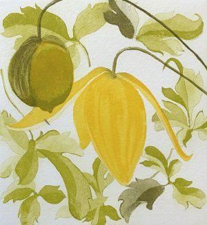 Graphic Studio Dublin •Grainne Cuffe: Clematis Orientalis