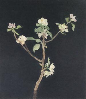 Cliona Doyle, Black Apple Blossom