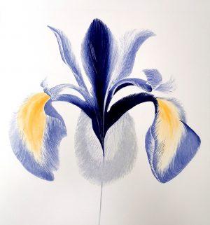 Graphic Studio Dublin •Grainne Cuffe: Graphic Studio Dublin: Iris Sibirica I